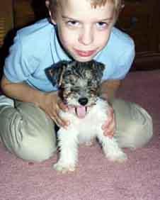 Wirefox Terrier Scrapb...